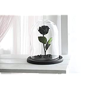 Beauty and the beast rose, Medium Size, Live Forever Rose, Enchanted Rose, Rose in glass dome, Forever rose, Rose in Glass, preserved rose, preserved flower, Black Rose 31