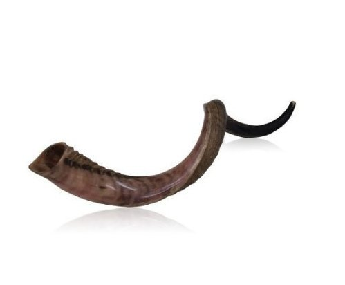 Natural Kudu Horn 20-22 Shofar Half Polished Sterile Clean New Perfect Sound Israel Shofar Isr-0761