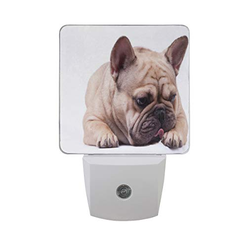 Night Light Brown French Bulldog Led Light Lamp for Hallway, Kitchen, Bathroom, Bedroom, Stairs, Daylight White, Bedroom, Compact