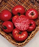 Tomato Mortgage Lifter Great Heirloom Garden Vegetable By Seed Kingdom 200 Seeds