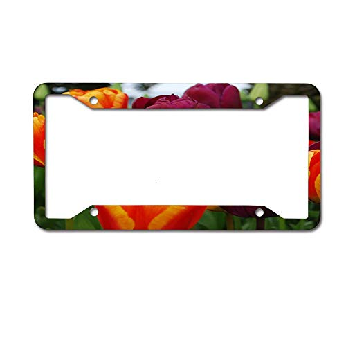 Jugbasee Colorful Tulip Square License Plate Personal Design Cover License Plate Auto Tag Metal Plate 6x12 Inch 4 Holes.