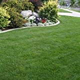 10kg BACKLAWN HARD WEARING LAWN GRASS SEED