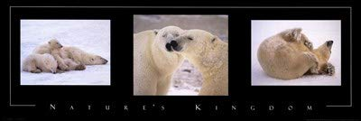 Nature's Kingdom-Polar Bears - 36x12 Inches - Art Print Poster
