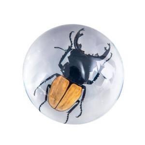 large-stag-beetle-paperweight-10cm-diameter