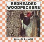 Red-Headed Woodpeckers (Birds)