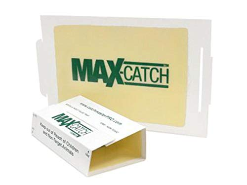 Catchmaster 72MAX Pest Trap, 36Count, - Crawling Lizard