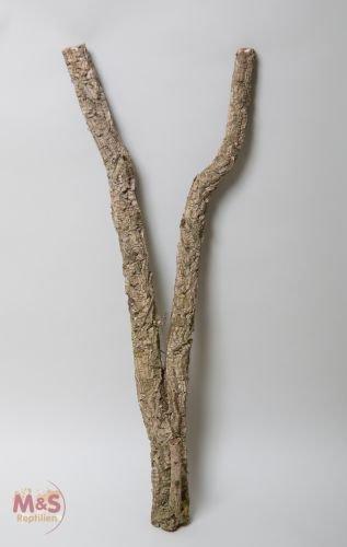 Liège Tronchos Branche de décoratives–Épaisseur env. 10cm de diamètre/env. 10 M&S Reptilien