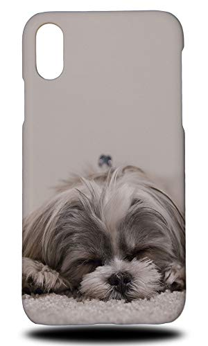 (Shih Tzu Dog 1 Hard Phone Case Cover for Apple iPhone XR)