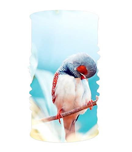 KSLIDS Animal Finch Birds Outdoor Headscarves, Womens and Mens Headband Headwear for Workout, Yoga