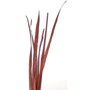 Green Floral Crafts Natural Slender Palms 3-4 ft. Tall 4