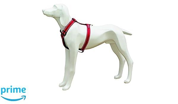 Freedog FD4002600 - Arnés Nylon Reflectante, para Perro, Color ...