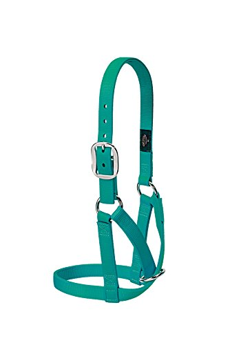 Weaver Leather Livestock Barn Cow Halter, Medium, Emerald Green