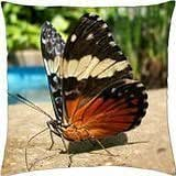 Butterfly Identification Mystery is Solved! - Throw Pillow Cover Case (18