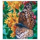 David's Garden Seeds Texas Native Butterfly Retreat Mix SL0031 (Multi) 500 Open Pollinated Seeds