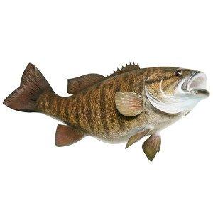 Smallmouth Bass Sticker fishing decal GUARANTEE 3 years no fade