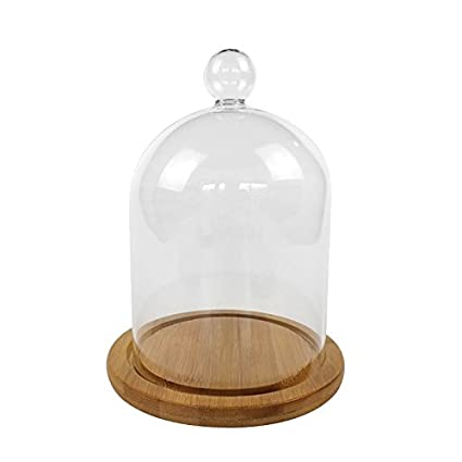 Buy Pinzhi Clear Glass Bell Jar Dome Flower Display Jar Vase With