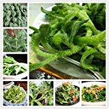 100PCS Ice Plant (Mesembryanthemum Crystallinum)Seeds Rare Delicious High Nutritional Value Vegetables Bonsai Plant Seeds