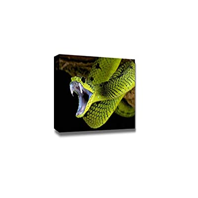 Canvas Prints Wall Art - Snap Shot of a Snake Ready to Attack | Modern Wall Decor/Home Art Stretched Gallery Canvas Wrap Giclee Print & Ready to Hang - 16