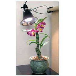 Bonsai Tree Clamp-On Grow Light Kit - 60 watts from BonsaiOutlet