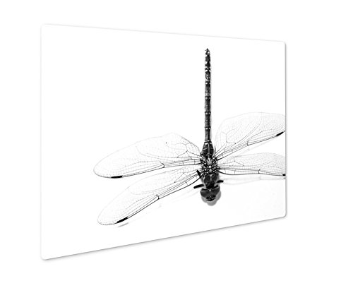 Ashley Giclee Dragonfly Beautiful Insect Sitting On A White, Wall Art Photo Print On Metal Panel, Black & White, 8x10, Floating Frame, AG6023650 - Dragonfly Picture Photo Frame