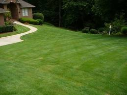 The Dirty Gardener Zenith Zoysia Grass Seed - 5 Pounds by The Dirty Gardener (Image #4)