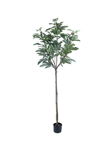 Gold Eagle USA 71'' Large Potted Fig Tree with Fruit