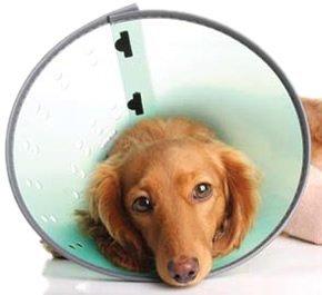 Cardinal Pet Care E-Collar Lozier Rack, Medium