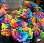Polyantha Rose - Rosa Climbing Plants | Polyantha Rose Flower Bonsai | Climbing Roses Bonsai | DIY Very Easy Plant for Garden Bonsai (200 Pcs|Bag)
