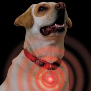 Amazon.com: LED intermitente llavero etiqueta para perros ...