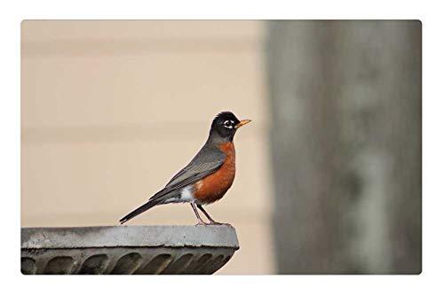 Tree26 Indoor Floor Rug/Mat (23.6 x 15.7 Inch) - Robin American Robin Redbreast Bird Birdbath Nature