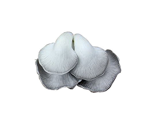 Set of 2 Artificial Four Leave Mushroom Perfect Table Supply 5.5'' Beige by Panda Superstore