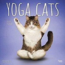Amazon.com : FUNNY 2019 YOGA CATS WALL CALENDAR-PLANNER ...