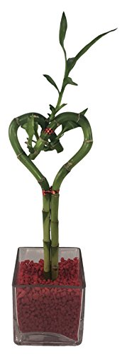 (Athena's Garden OPPROMO4-SHB Single Heart Bamboo with 4