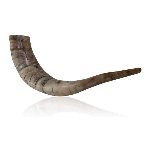 The 8 best shofars