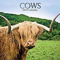 Cows 2019 Calendar -