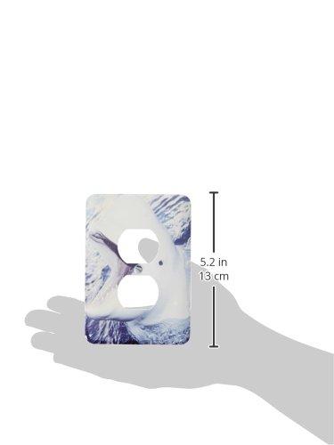 Delphinapterus leucas 2 Plug Outlet Cover 3dRose lsp/_9951/_6 Beluga Whale
