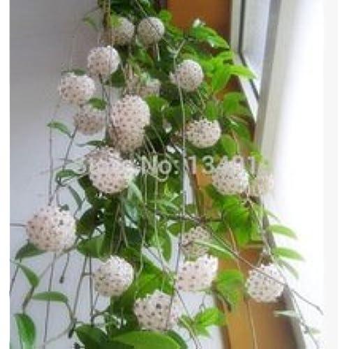 Indoor Potted Plant Seeds: Amazon.com