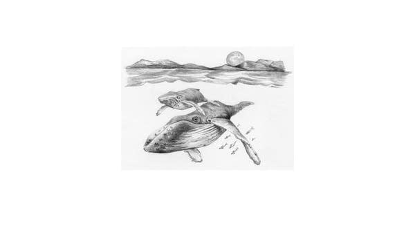 Sea Turtles 5 by 7-Inch Royal Brush Mini Sketching Made Easy Kit
