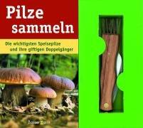 Pilze sammeln: Die wichtigsten Speisepilze und ihre giftigen Doppelgänger