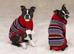 Multi Bright Turtleneck - Zack & Zoey Turtleneck Dog Sweater and Scarf Multi-Bright Size XXS XX-Small