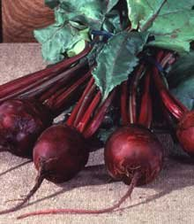 Beet Detroit Dark Red Great Heirloom Vegetable Seeds By Seed Kingdom