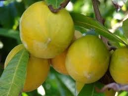 Fresh Canistel (Eggfruit) 3lb