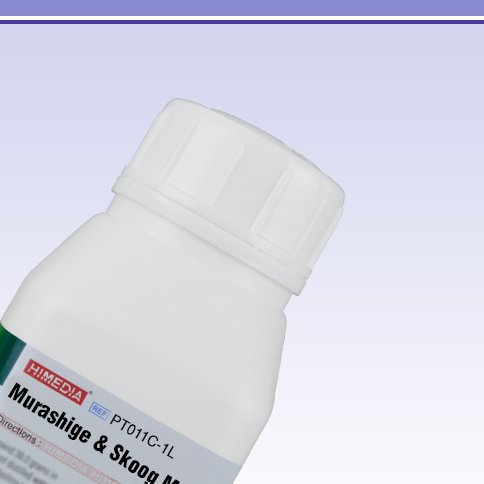 HiMedia PT011C-1L Murashige and Skoog Medium with Vitamins, Sucrose, 6-BAP, Agar and without CaCl2, IAA, Kinetin, 1 L by HiMedia