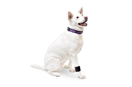 Dog Wrist Wrap Size: Small