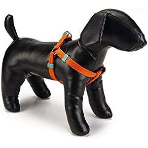 Amazon.es: Collares, arneses y correas - Perros: Productos para ...