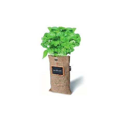 Baza Bio Hängender Garten Kräuter & Gemüse verschieden Sorten Walderdbeere Kirschtomaten Cayennepfeffer Rucola Basilikum Schnittlauch Koriander Petersilie (Basilikum)