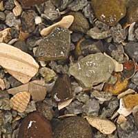 Carib Sea ACS00255 Rift Lake Authentic for Aquarium, 50-Pound