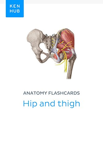 Anatomy Flashcards Hip And Thigh Learn All Bones Ligaments And