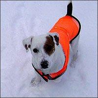Pet Reflective Vest Xlarge, My Pet Supplies