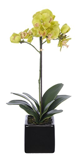 House of Silk Flowers Artificial 17-Inch Phalaenopsis Orchid, Mini, Green